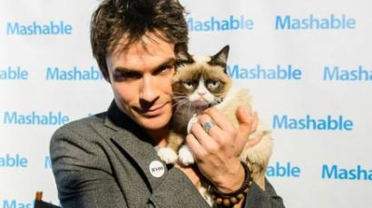 Film készül Grumpy Catről