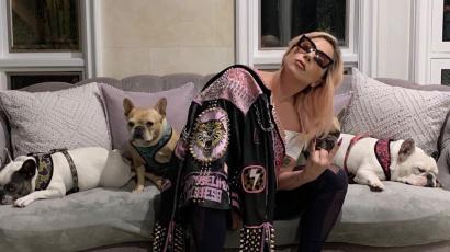 Igazi csoda! Lady Gaga két elrabolt kutyája meglett