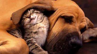Íme a bizonyíték, hogy létezik kutya-macska barátság!