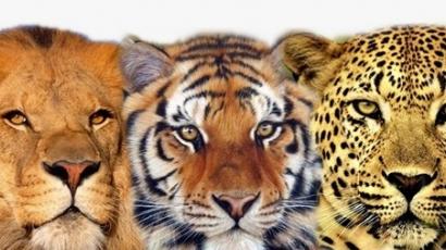 Íme, az emberre legveszélyesebb állatok listája!