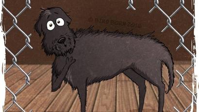 Íme egy kutya örökbefogadásának igaz és megindító története