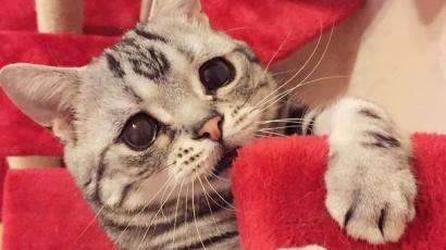 Ismerd meg a világ legszomorúbb cicáját!