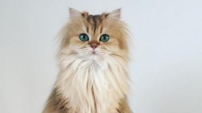Ismerd meg Smoothie-t, a világ legfotogénebb macskáját!