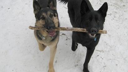 Kutyasétáltatással az egészségért