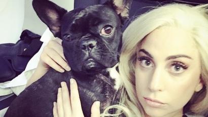Lady Gaga kutyája modellnek állt