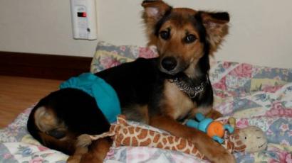 Lebénult kutyust mentett meg egy kanadai modell