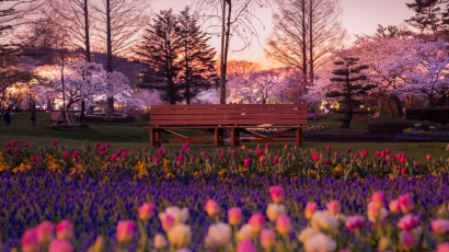 Lélegzetelállító: így néz ki Japán tavasszal!
