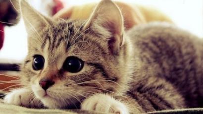 Macska mentette meg egy gyerek életét