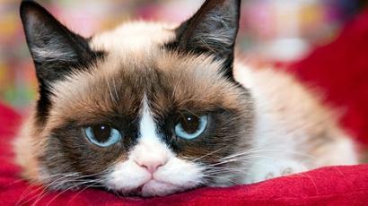 Karácsonyi témájú filmben játszik főszerepet Grumpy Cat