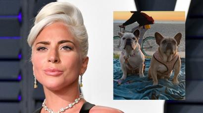 Megkapja Lady Gaga kutyáinak megtalálója az 500 ezer dolláros nyomravezetői díjat?