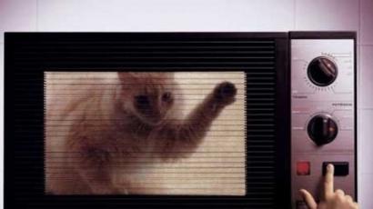 Mikróban ölte meg a macskáját, mert rátámadt az aranyhalra