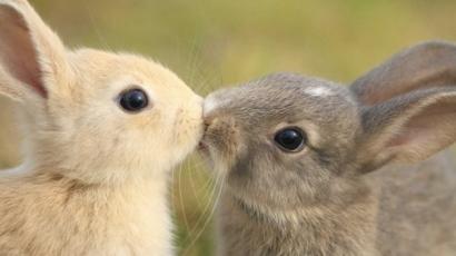 Nem csak az emberek szeretnek csókolózni! Íme a bizonyíték!