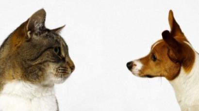Okosabbak a macskatartók!