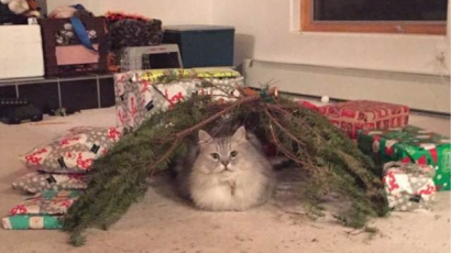 Rosszul sikerült a karácsonyod? A képek láttán máshogy fogod gondolni!