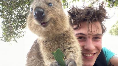 Shawn Mendes egy kis ausztrál szőrmókkal fotózkodott, elolvadt az internet