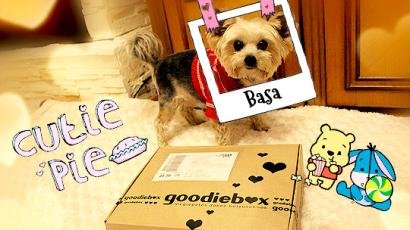 Tedd kutyusodat a világ legboldogabb házi kedvencévé! Mutatjuk, hogyan!