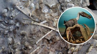 Több száz megkövesedett dinoszaurusztojásra bukkantak a paleontológusok!