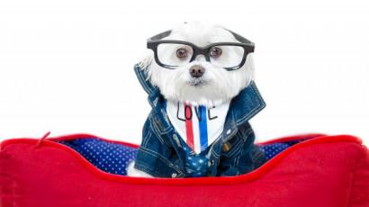 Ez a cuki hófehér kutyus az Instagram sztárja