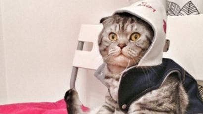 Újabb macskából lett internetsztár
