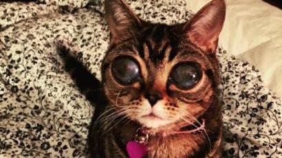 Űrlényszemű macska az internet új sztárja