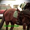 lovasvircsi