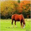 HorsesMyLife