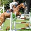 Horse217