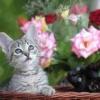 kitty597