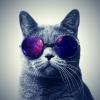 MeowMeow98