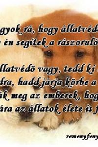 alkonyat999