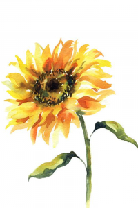 SunFlower122