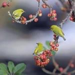 madárkák.jpg