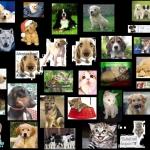 Kutyák képei!.JPG