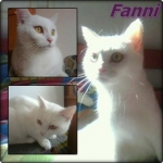 Fanni cicám♥