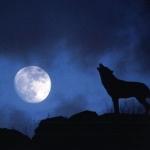 Farkas és a hold