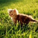 wp_Pussy_Cat_1920x1200.jpg
