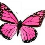 PinkButterfly.jpg