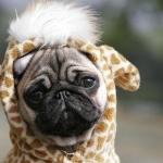 Kutyaa♥.!