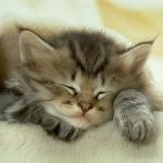 Alvó cica.jpg
