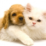~ Cat and Dog ~