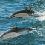 dolphin03_1024x768.jpg
