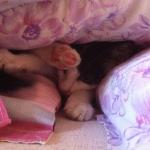 Meine Katze :P