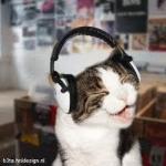 Swag cat