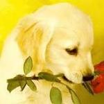 Very nice dog !!! :)