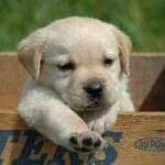 kicsi kutya.jpg