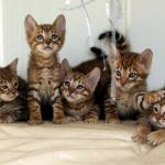 cute%20cats.jpg
