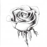 Rozsa.jpg