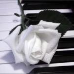 rose in piano.jpg
