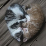 macska szíw.jpg