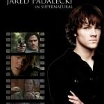 Jared39.jpg